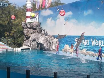 The dolphin show.