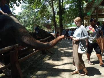 Me feeding an elephant.