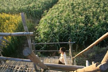 Daniel on the bridge.